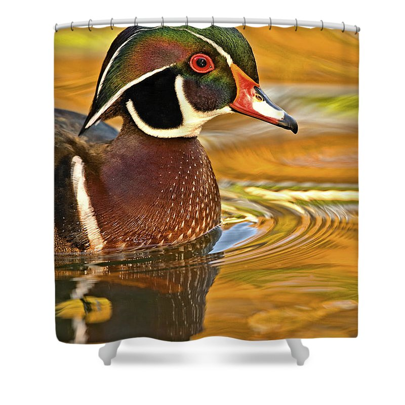 Aix Shower Curtain featuring the photograph Woody by Jack Milchanowski