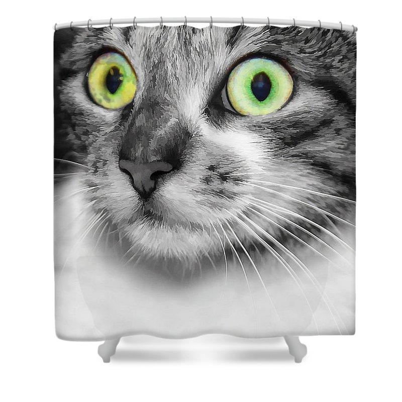 Brown Tabby Shower Curtain featuring the photograph Wow by Joyce Baldassarre