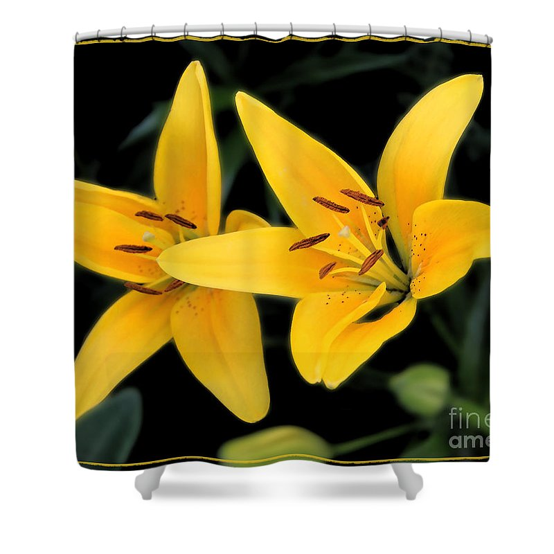 Colorado Shower Curtain featuring the photograph Yellow Beauties by Bob Hislop