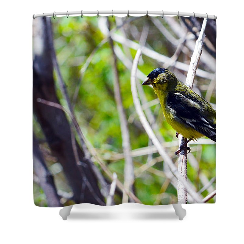 Bird Shower Curtain featuring the photograph Yellow Bird by Brent Dolliver