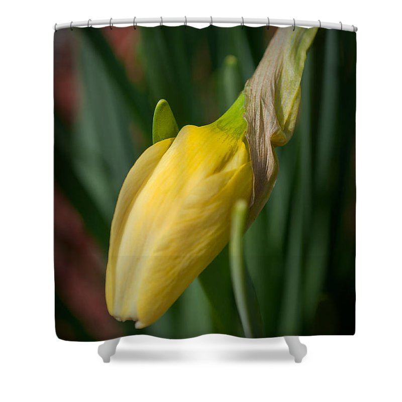 Yellow Shower Curtain featuring the photograph Yellow Bud by Photos By Cassandra