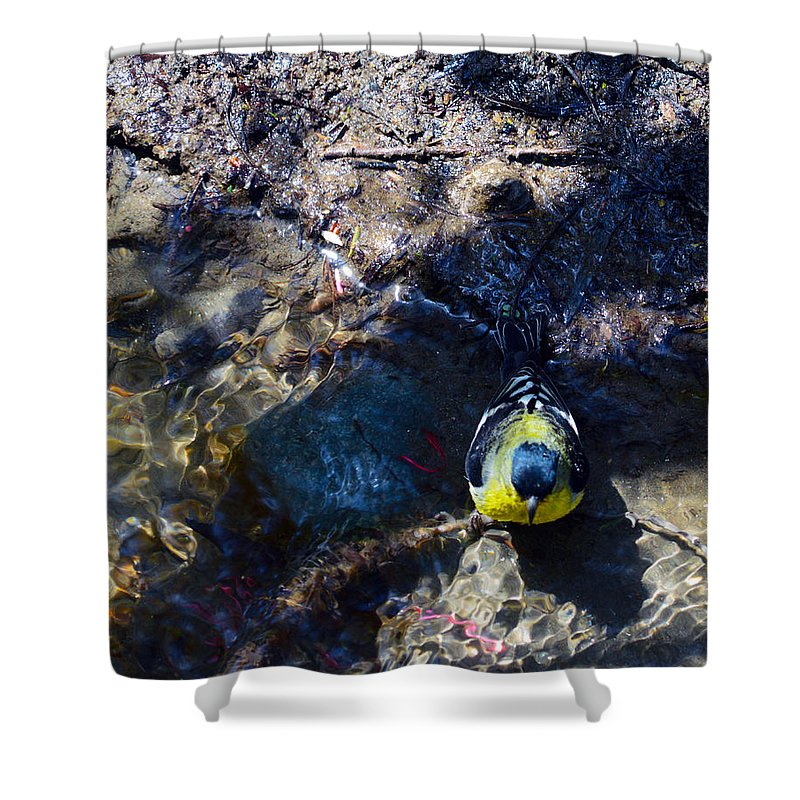 Bird Shower Curtain featuring the photograph Yellow Chested Birdy by Brent Dolliver