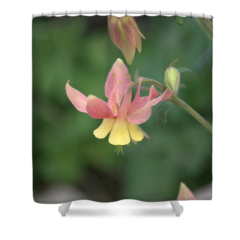 Flower Shower Curtain featuring the photograph Yellow Columbine by Frank Madia