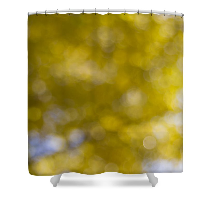 Fall Shower Curtain featuring the photograph Yellow Fall Foliage Blurred Background by Jit Lim