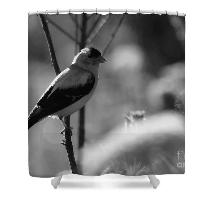 Yellow Shower Curtain featuring the photograph Yellow Finch B-w by Kenny Glotfelty