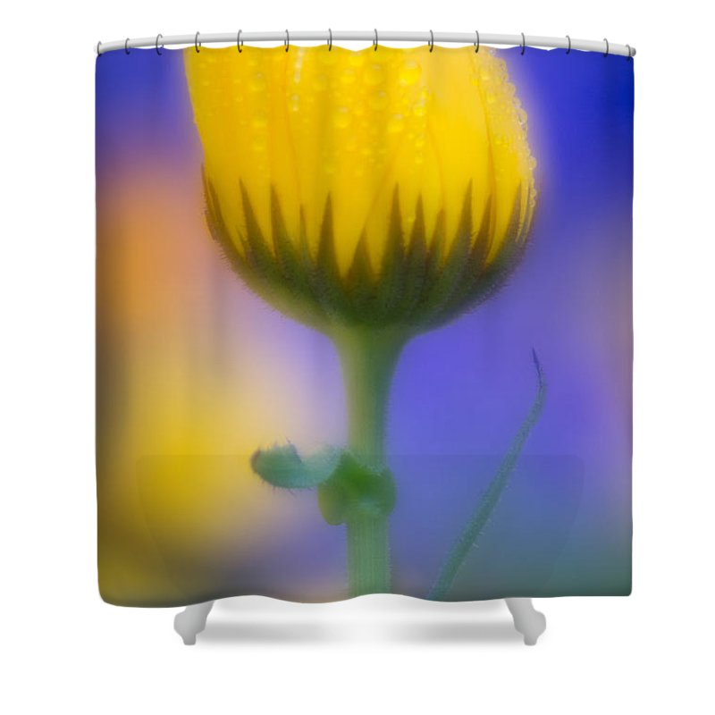 Yellow Flower Shower Curtain featuring the photograph Yellow Flower With Dew Drops by Greg Nyquist