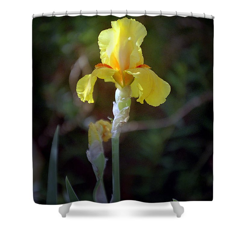 Iris Shower Curtain featuring the photograph Yellow Iris by Kathy McClure