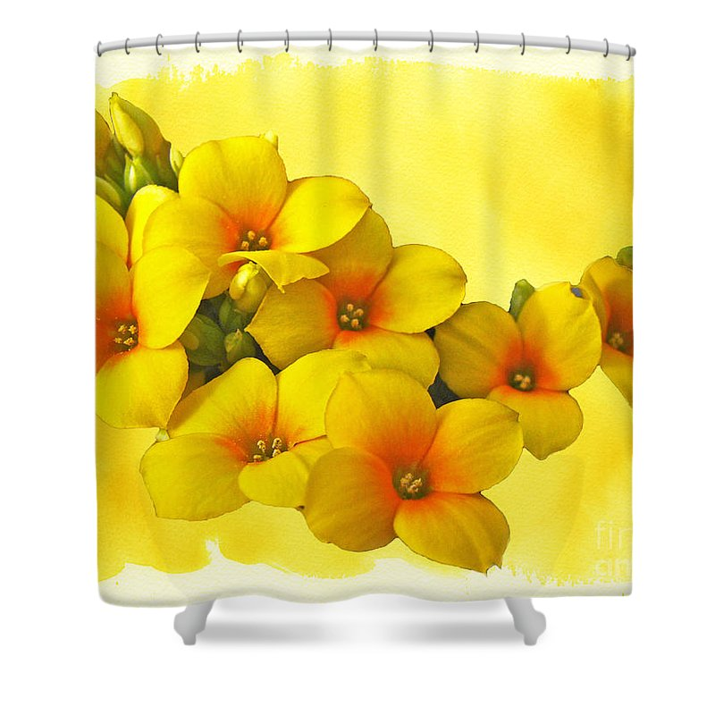 Yellow Shower Curtain featuring the photograph Yellow Kalanchoe - Succulent Sunshine by Mother Nature