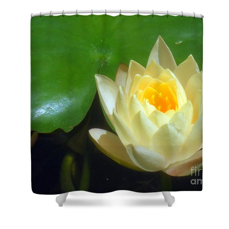 Yellow Shower Curtain featuring the photograph Yellow Lily by Jennifer Lavigne