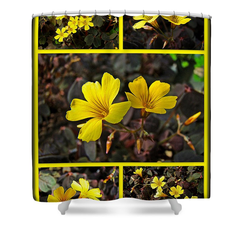 Yellow Shower Curtain featuring the photograph Yellow Oxalis - Oxalis Spiralis Vulcanicola by Mother Nature