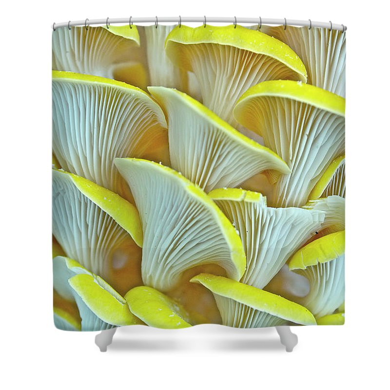 Edible Mushroom Shower Curtain featuring the photograph Yellow Oyster Mushrooms by Keith Getter