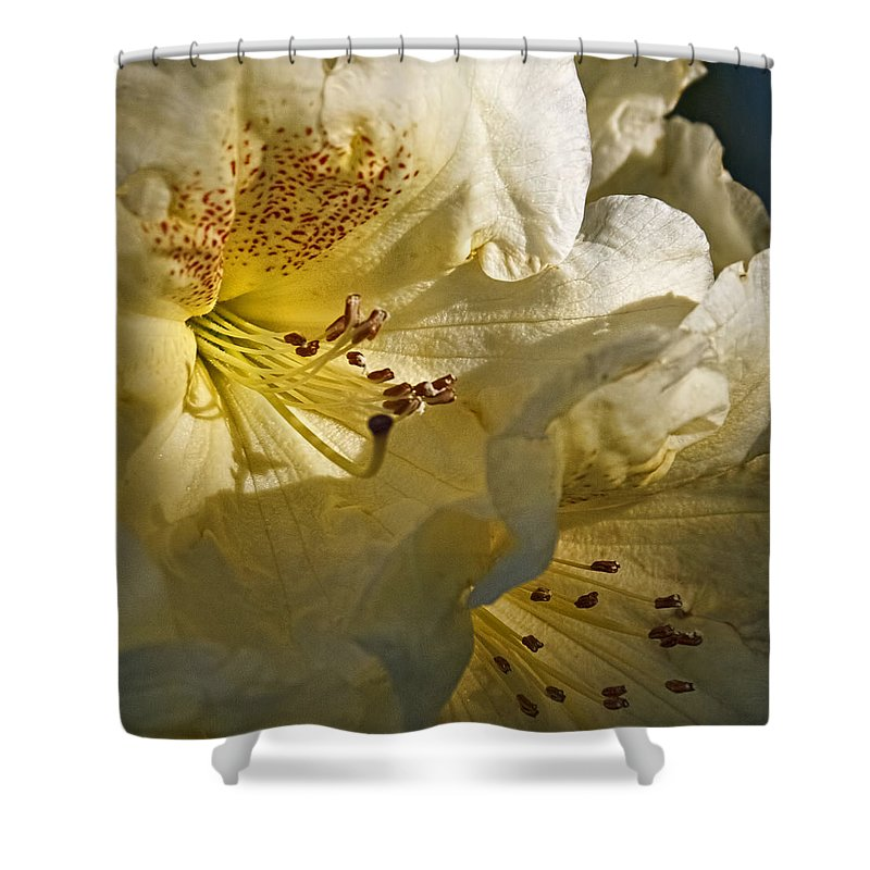Yellow Rhododendron Shower Curtain featuring the photograph Yellow Rhododendron by Wes and Dotty Weber