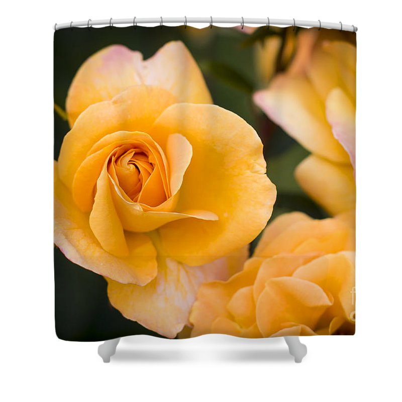 Bloom Shower Curtain featuring the photograph Yellow Rose by Brian Jannsen
