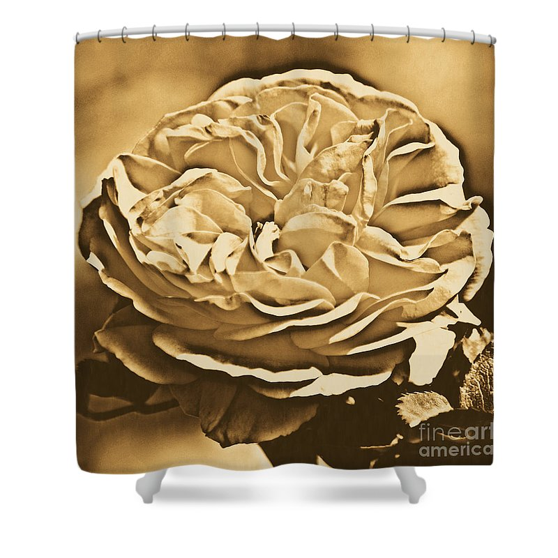 Travelpixpro Shower Curtain featuring the digital art Yellow Rose Of Texas Floral Decor Square Format Rustic Digital Art by Shawn O'Brien