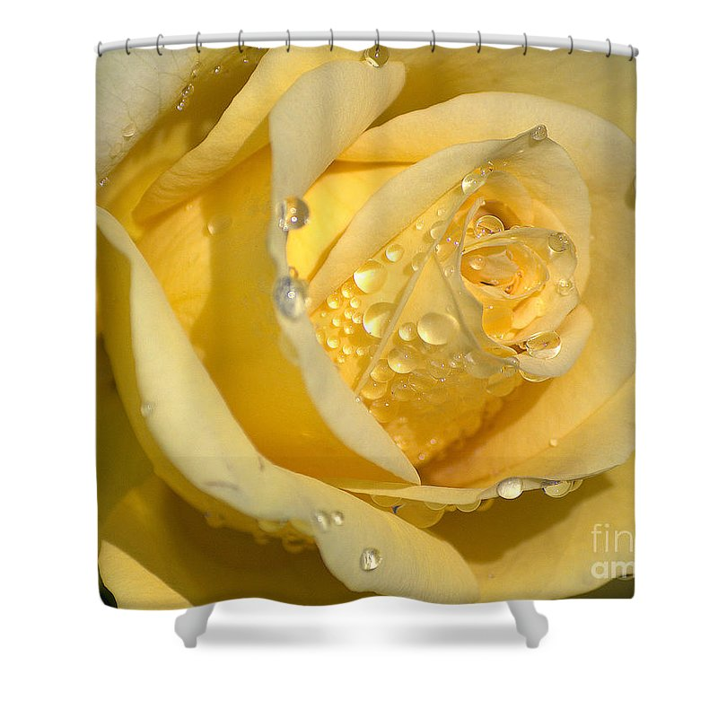 Rose Shower Curtain featuring the photograph Yellow Rose by Sharon Elliott