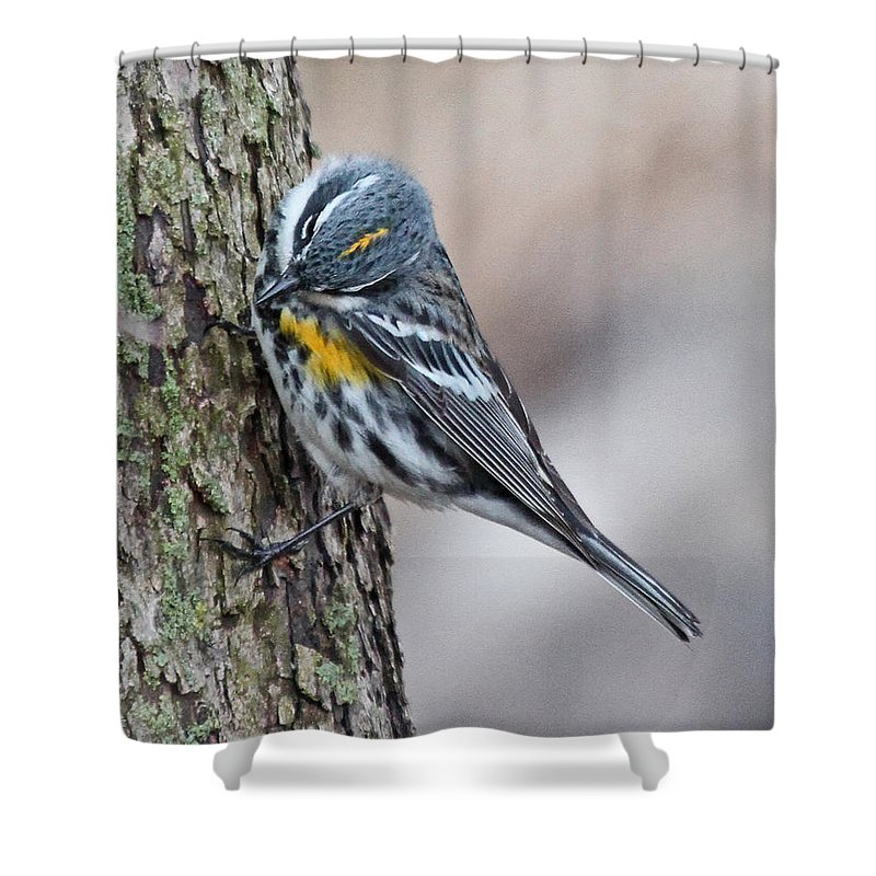 Nature Shower Curtain featuring the photograph Yellow-rump Warbler by Mike Dickie