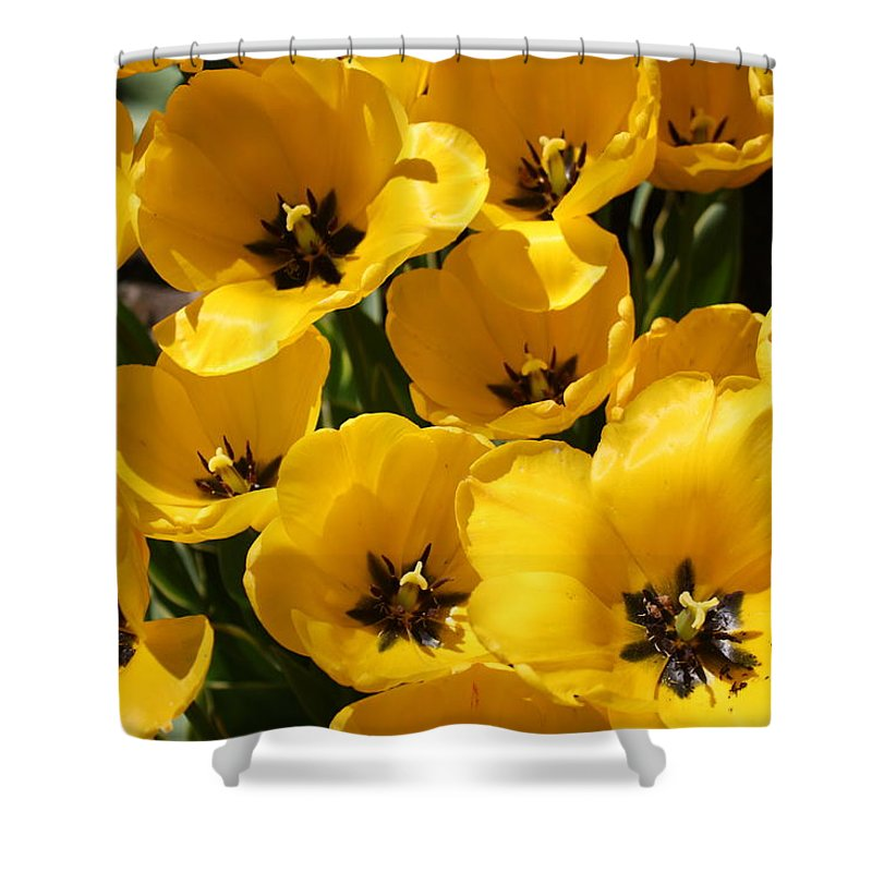 Tulips Shower Curtain featuring the photograph Golden Tulips In Full Bloom by Dora Sofia Caputo Photographic Design and Fine Art