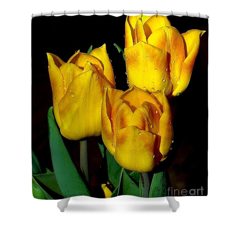 Tulips Shower Curtain featuring the photograph Yellow Tulips On Black by Janette Boyd
