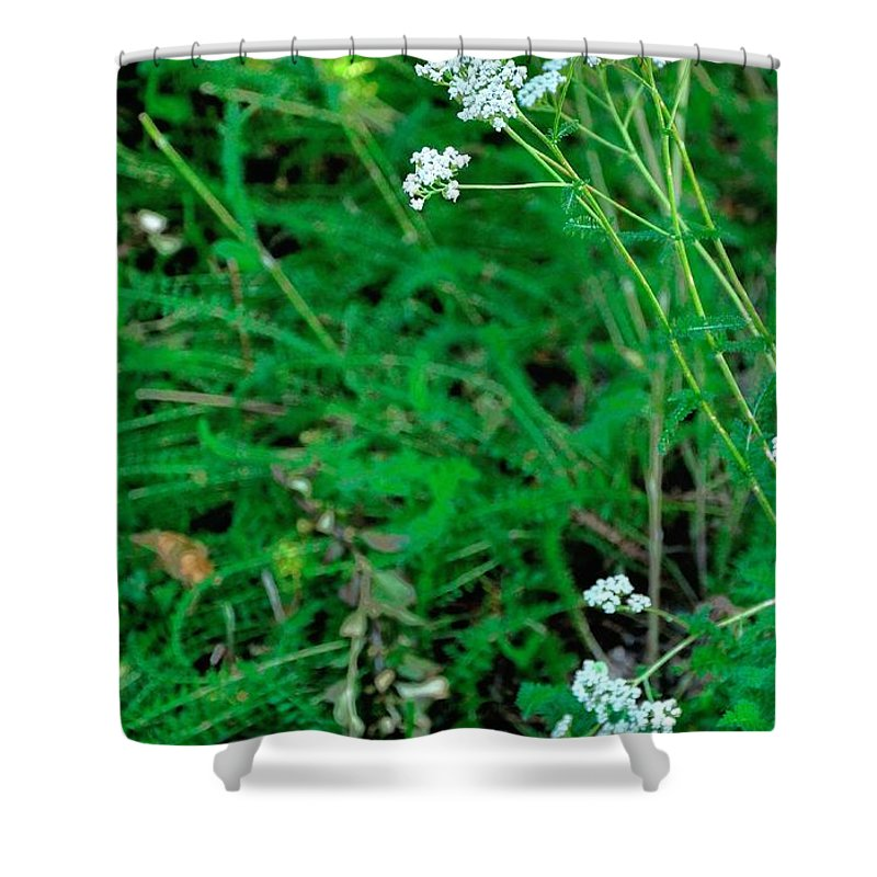 Landscape Shower Curtain featuring the photograph Yellow White 16169 by Jerry Sodorff