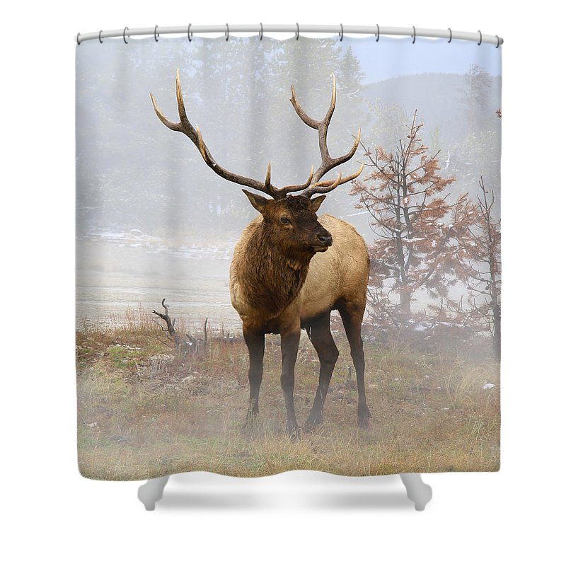 National Park Shower Curtain featuring the photograph Yellowstone Bull Elk by Ed Riche