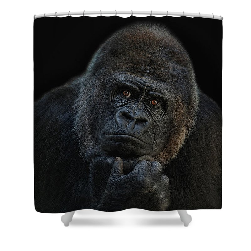 Ape Shower Curtains