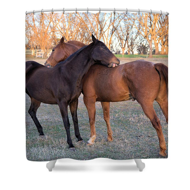 3741 Shower Curtain featuring the photograph You Scratch My Back And I'll Scratch Yours by Gordon Elwell