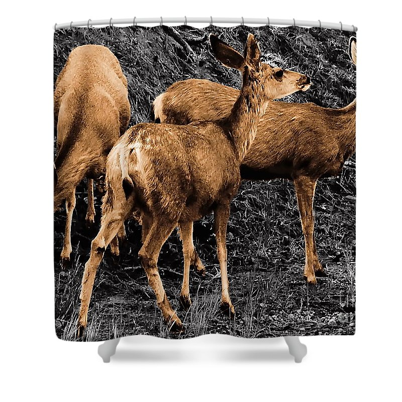 Digital Selective Color Photo Shower Curtain featuring the digital art Young And Hungry Sc by Tim Richards