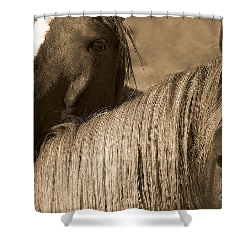 Equidae Equus Caballus Shower Curtain featuring the photograph Young Colts by J L Woody Wooden