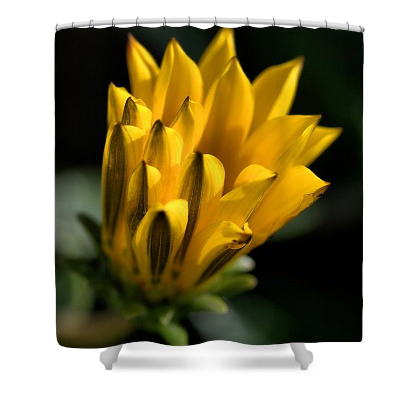 Bud Shower Curtain featuring the photograph Young Daisy by Joy Watson