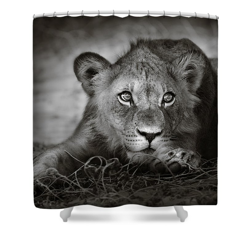 Wild Shower Curtain featuring the photograph Young lion portrait by Johan Swanepoel