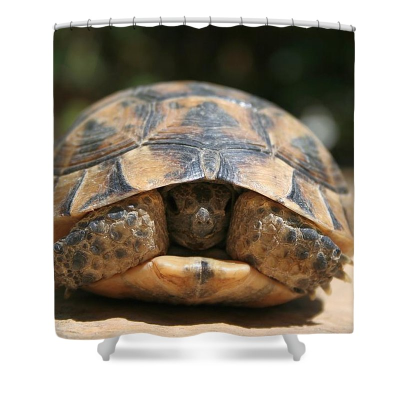 Tortoise Shower Curtain featuring the photograph Young Spur Thighed Tortoise Looking Out Of Its Shell by Tracey Harrington-Simpson