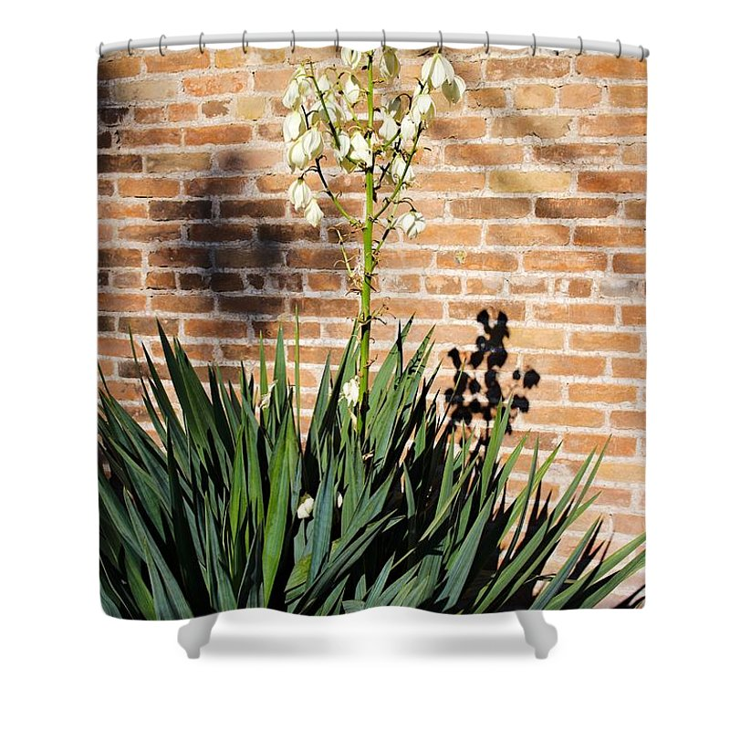 Yucca Shower Curtain featuring the photograph Yucca In The Morning by Gary Richards