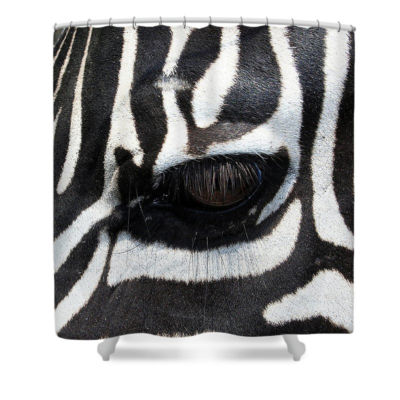 Zebra Shower Curtain featuring the photograph Zebra Eye by Linda Sannuti
