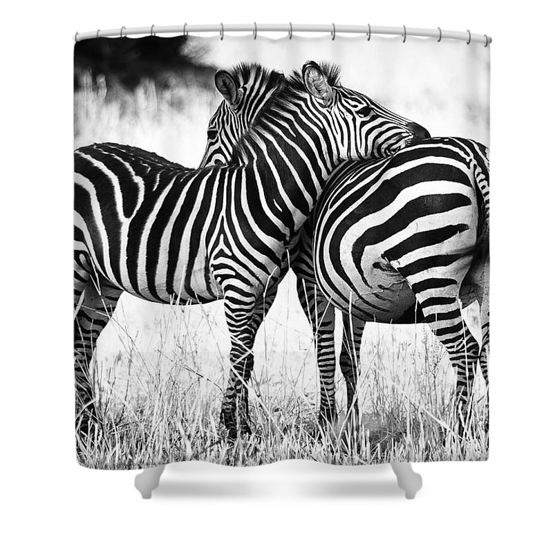 3scape Shower Curtain Featuring The Photograph Zebra Love By Adam Romanowicz
