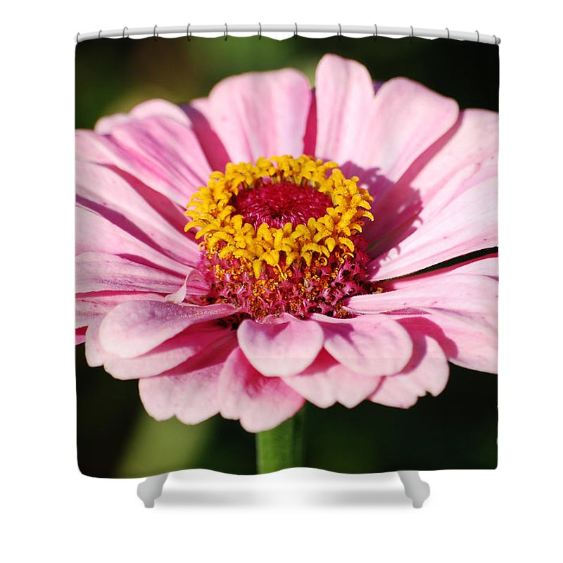 Zinnia Shower Curtain featuring the photograph Zinnia Pink Flower Floral Decor Macro by Shawn O'Brien