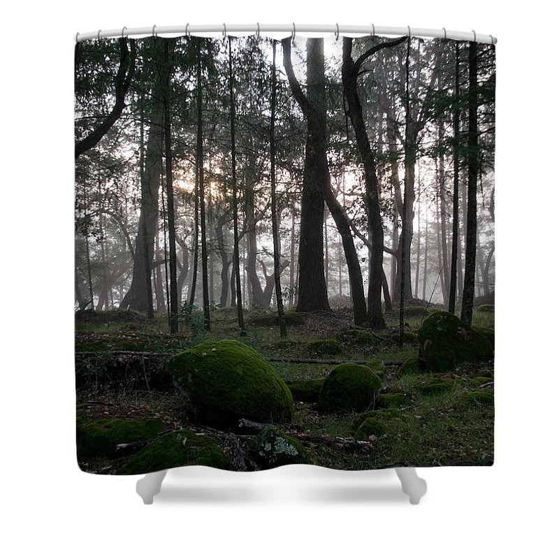 Zombies Shower Curtain featuring the photograph Zombie Trees by Bradley Bennett