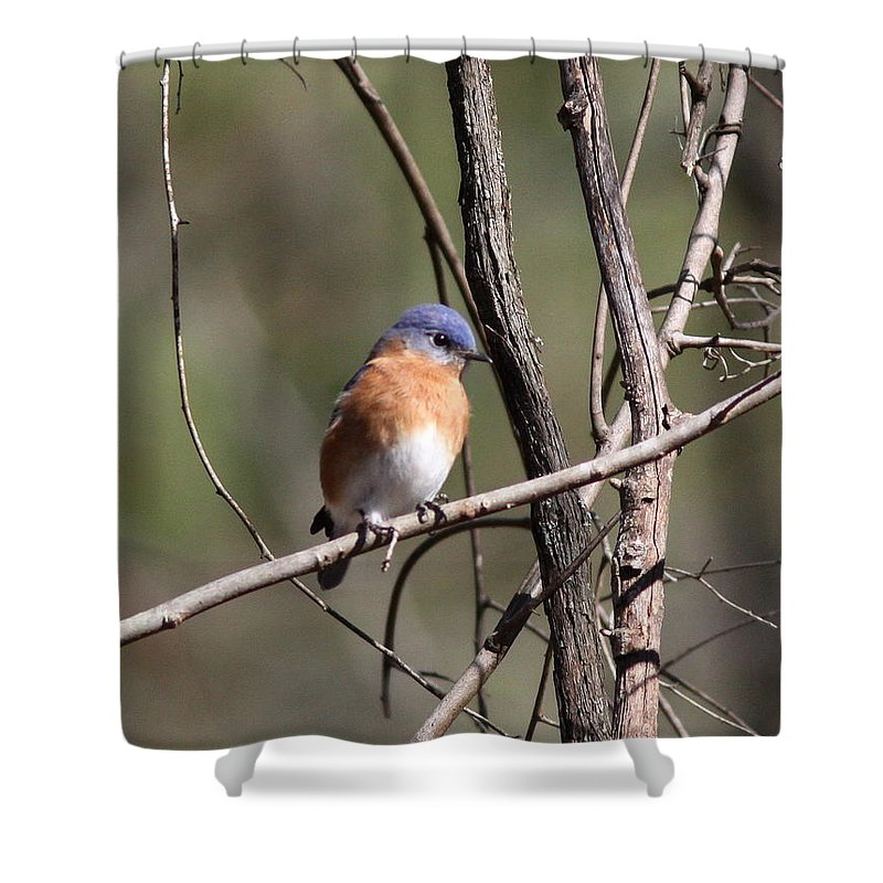 Blue Shower Curtain featuring the photograph Sucarnoochee River - Bluebird by Travis Truelove