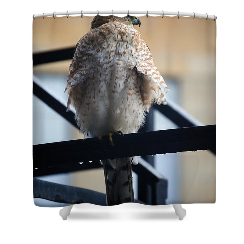 Shower Curtain featuring the photograph 01 Falcon by Michael Frank Jr