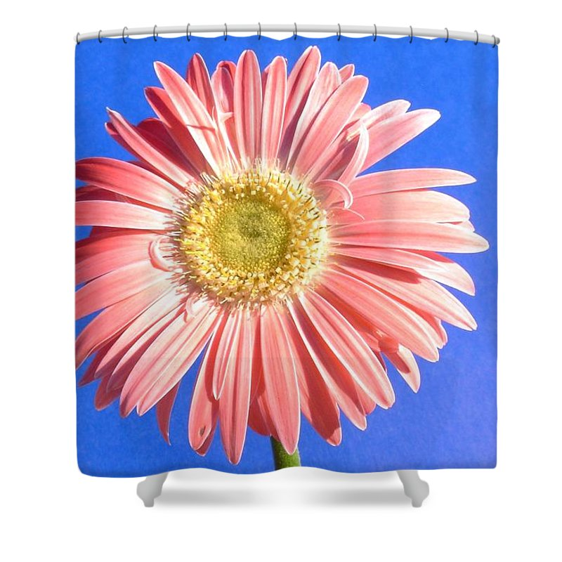 Gerbera Photographs Shower Curtain featuring the photograph 0711c2-001 by Kimberlie Gerner