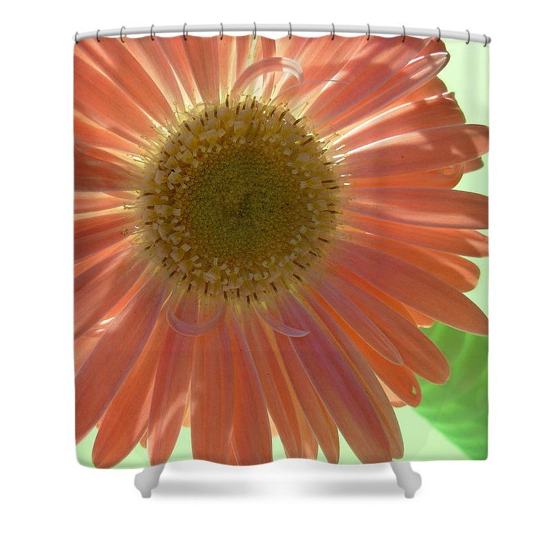 Gerbera Photographs Shower Curtain featuring the photograph 0769 by Kimberlie Gerner