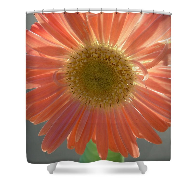 Gerbera Photographs Shower Curtain featuring the photograph 0803 by Kimberlie Gerner