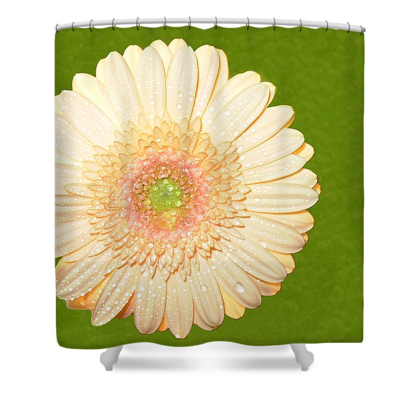 Gerbera Photographs Shower Curtain featuring the photograph 0841a1 by Kimberlie Gerner