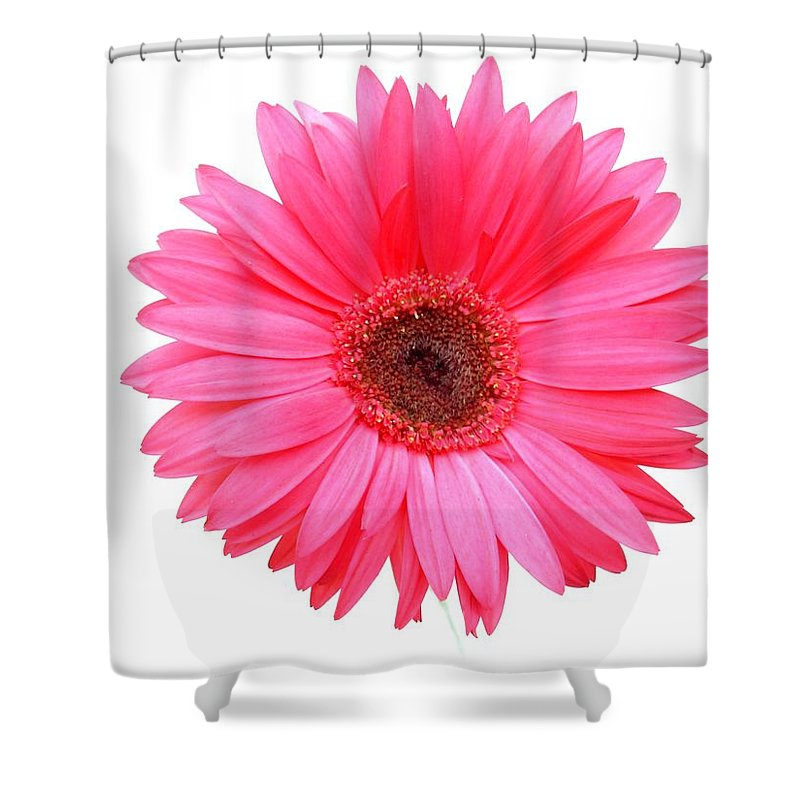 Gerbera Photographs Shower Curtain featuring the photograph 5556c by Kimberlie Gerner