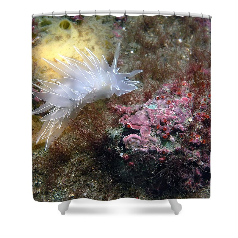 Alabaster Shower Curtain featuring the photograph Alabaster Nudibranch by Derek Holzapfel