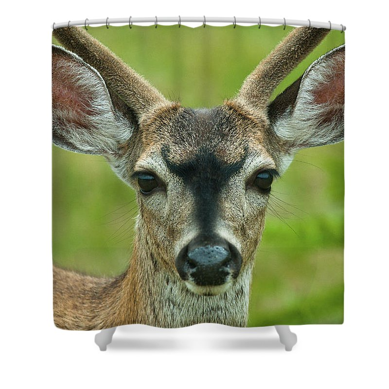 Deer Shower Curtain featuring the photograph All Ears by Greg Nyquist