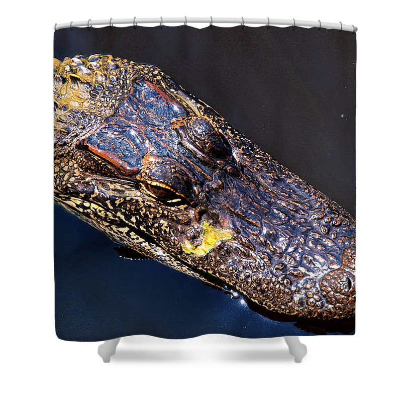 Alligator Shower Curtain featuring the photograph Alligator In Mississippi River by Paul Ge