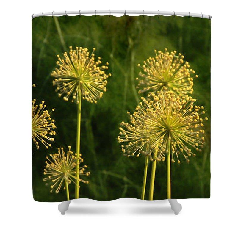 Flowers Shower Curtain featuring the photograph Allium by Francesa Miller