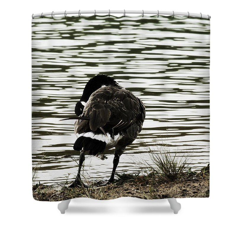 Canadian Goose Shower Curtain featuring the photograph At The Waters Edge by Douglas Barnard