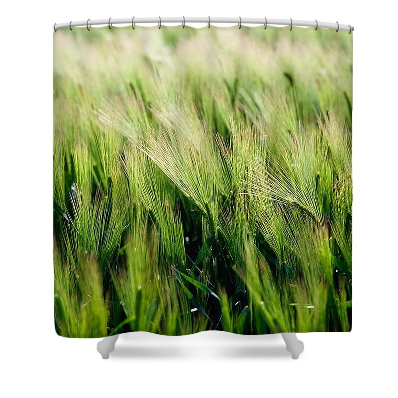 Background Shower Curtain featuring the photograph Barley, Co Down by The Irish Image Collection