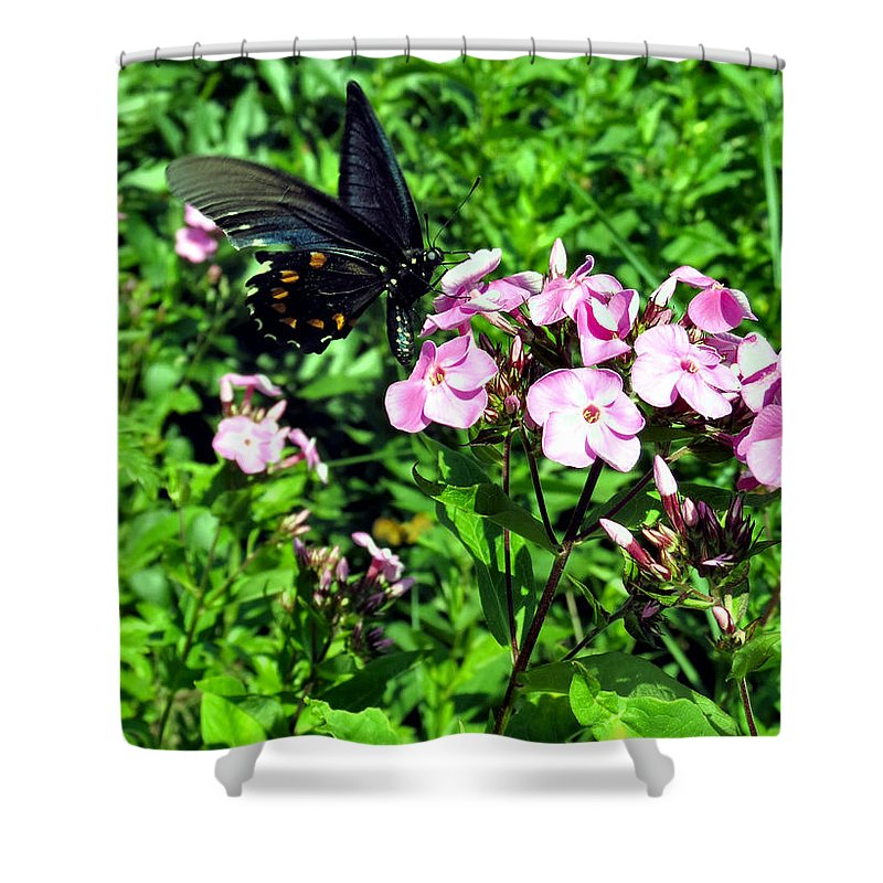 Black Shower Curtain featuring the photograph Blackie by Art Dingo